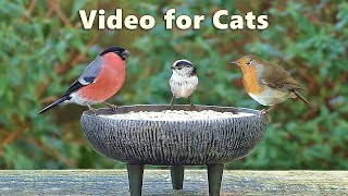 Videos for Cats to Watch Birds - Garden Bird Extravaganza - 8 Hours NEW ✅