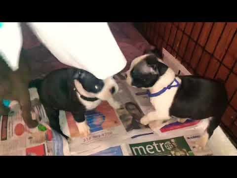 Destructive puppies!