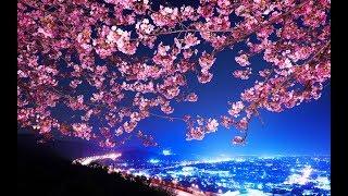 5 bài hát hay về Sakura (Phần 2)