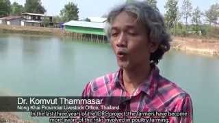 In Conversation with the Poultry Production Clusters project in Thailand