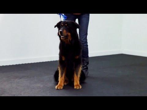 Training a Dog to Heel | Teacher's Pet With Victoria Stilwell