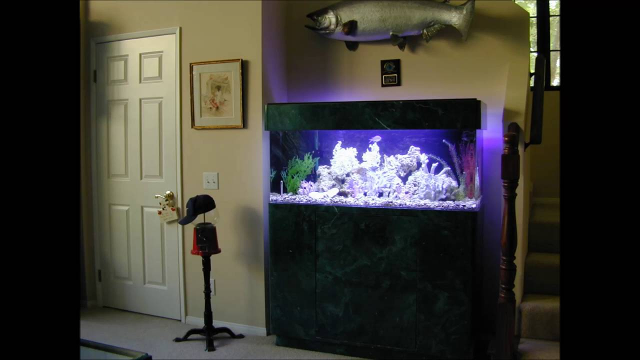 Fish Tank Wall Unit YouTube - Fish tank designs for home