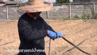 Repeat youtube video ผู้จัดการมัน - วิธีการต่อสายเทปน้ำหยด