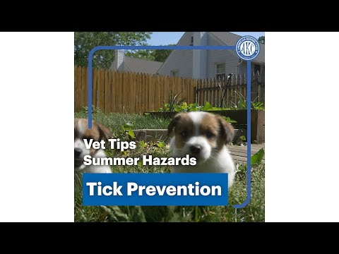 Vet tips | Tick Prevention - Summer Hazards