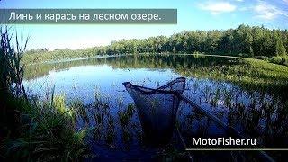 Рыбалка на озере в Беларуси. Витебск. Линь и карась.