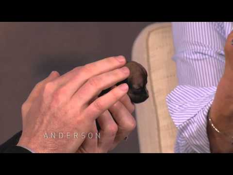 Beyonce: One of the World's Smallest Dogs