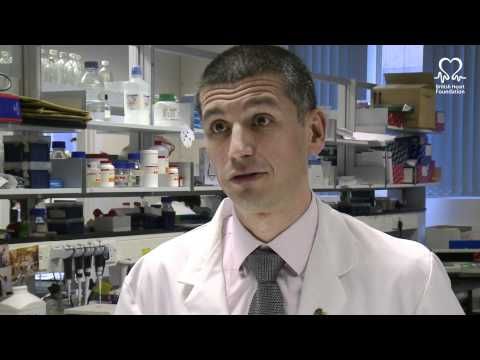British Heart Foundation - The Science Of The Zebrafish