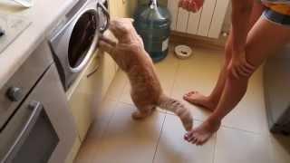 Прикол кот просит есть