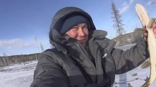 Перволедье в Сибири ноябрь 2018. Рыбачим на балансиры в затопленном лесу !!!