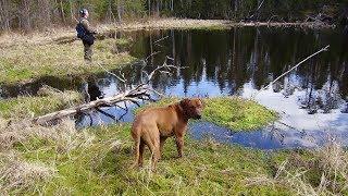 Рыбалка в Карелии. Всего по чуть-чуть. А еще про моего друга - азартного рыбака и охотника.