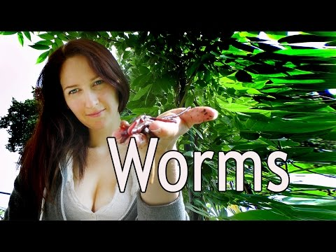 Worms castings. Indeterminate Tomatoes, Deep bed planting and Garden update