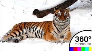 В Московском зоопарке звери ждут прихода весны