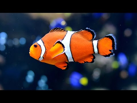 Most Beautiful fishes at India International Aqua Show