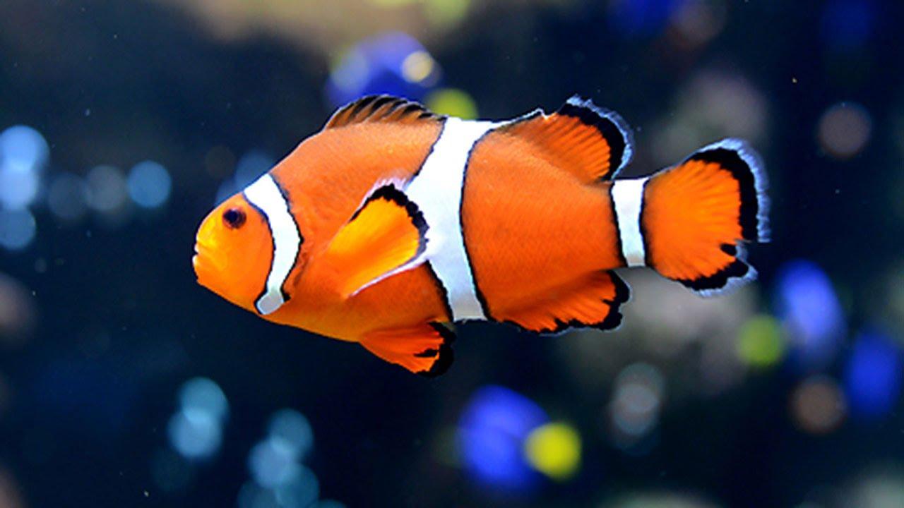 Most Beautiful fishes at India International Aqua Show ...