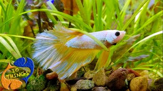 Top 10 Tips To Make Your Betta Fish Happy