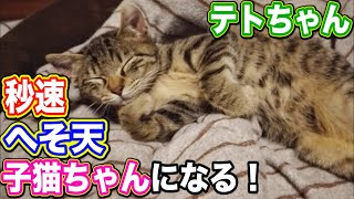元野良猫 子猫 モフモフ へそ天 【テトちゃん秒速へそ天子猫ちゃんになる!】 Kitten Cat Japanese traditional house