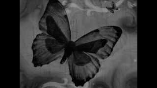 Black Butterfly by The Trinity