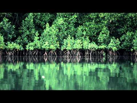 Bonobo - First Fires (Instrumental)
