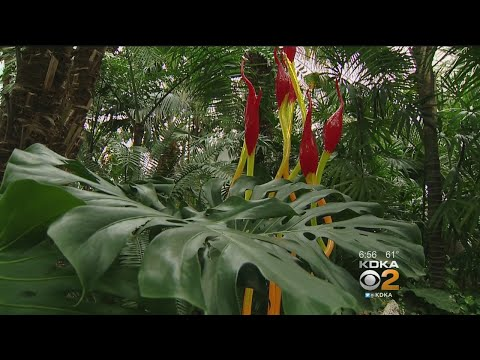 Phipps Conservatory Unveils Newly-Restored Palm Court