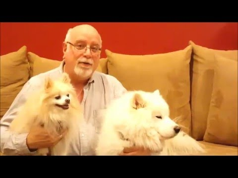 Natural Treatment to Rid Yourself of Allergies to Pets