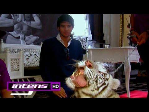 Pemeran 7 Manusia Harimau Bertemu Harimau Sungguhan - Intens