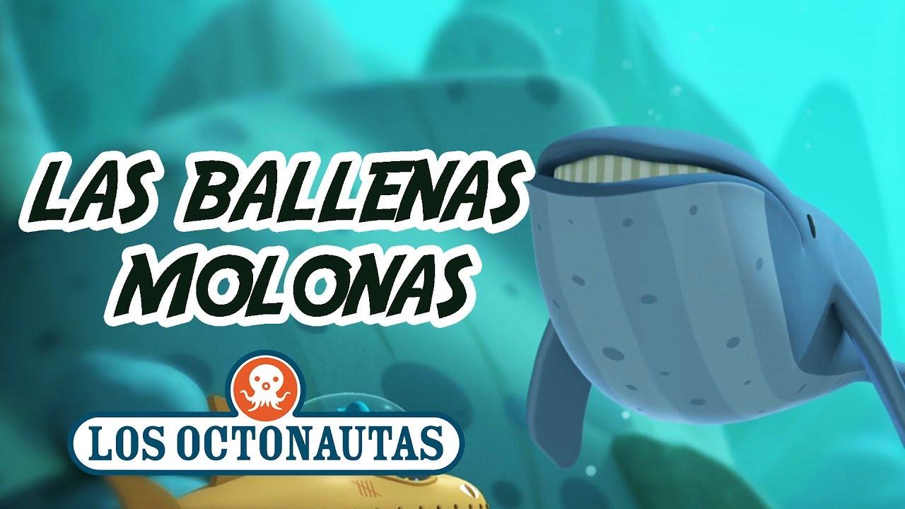 Los Octonautas Oficial en Español - Las ballenas molonas | Aventuras divertidas en el mar