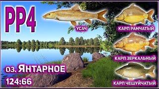УСАЧ НА ЯНТАРНОМ РР4 КАРП НА ЯНТАРНОМ РР4 РУССКАЯ РЫБАЛКА 4 ЯНТАРКА УСАЧ RUSSIAN FISHING 4