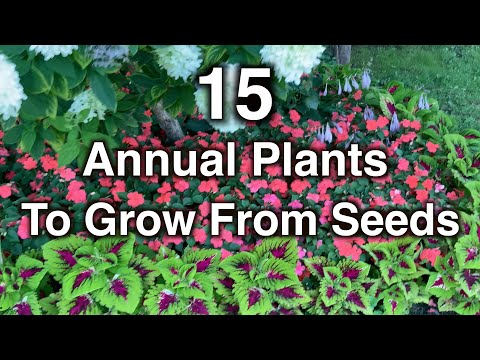 15 Annual flowers you should grow from seeds. This is why!