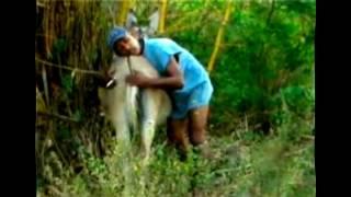 El Suceso Mas Extraño Ocurridos Con Con Las Vacas Y Burras Violadas De Venezuela-guarico