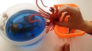 морские животные Распаковка игрушек Обзор игрушек Купание игрушек