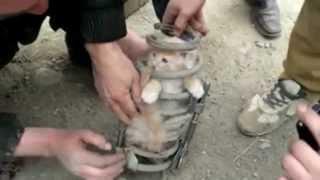 кот Персик застрял в пружине