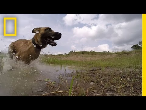 Meet the Dog Trained to Take Down Poachers | Short Film Showcase