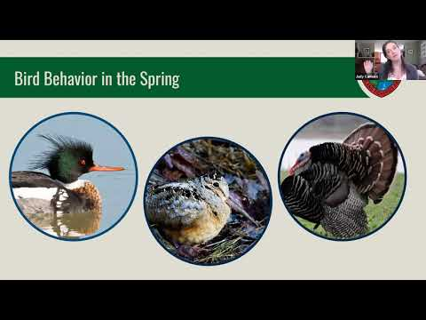 Lunch & Learn: Spring Birds in Maine