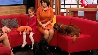 Наталья Воронина.  Такса - это и кошка и собака