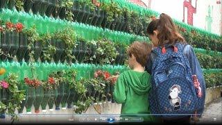 הקיר הירוק - פעילות בנושא איכות הסביבה לבתי ספר