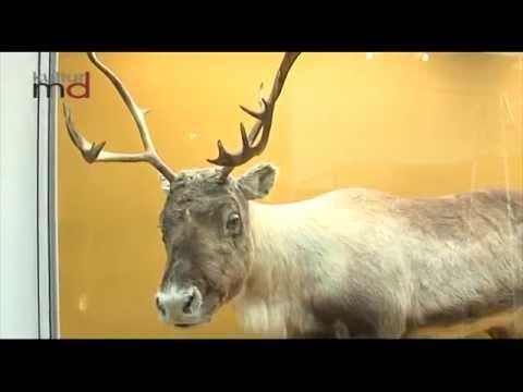 Museum für Naturkunde Ausstellung zum Eiszeitalter