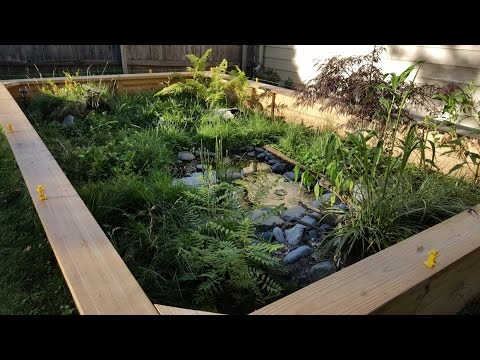 Outdoor Box Turtle Enclosure Channel Update
