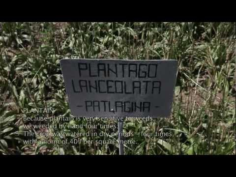 MedPlaNet Project - Cultivating medicinal and aromatic plants
