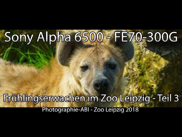 Frühlingserwachen im Zoo Leipzig - Sony Alpha 6500 - FE70-300G - Gobe ND 2-400