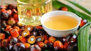 видео Для чего растительные жиры содержатся в детских смесях? Мифы о пальмовом масле.