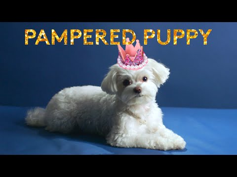 Meet Mochi The Most Pampered Pup In Nyc Youtube