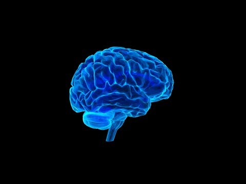 आपके दिमाग के बारे में सबसे गज़ब बातें | New Scientific Researches On the Human Brain thumbnail