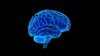 आपके दिमाग के बारे में सबसे गज़ब बातें | New Scientific Researches On the Human Brain