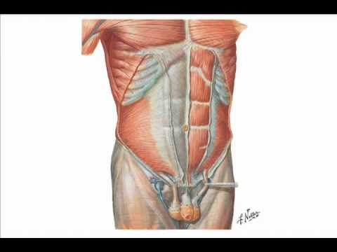 Abdominal Wall Hernias Youtube