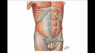 Repair Masturbation after hernia