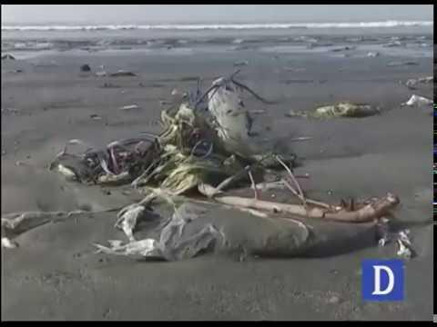Marine pollution in karachi