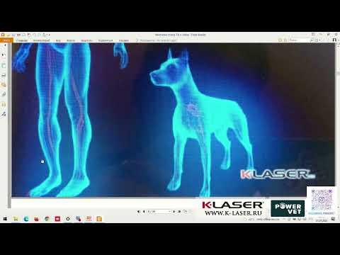 Елизавета ВАЙНБЕРГ-ОЗЕРАНСКАЯ: Лазерная терапия - прорыв в лечении и реабилитации животных