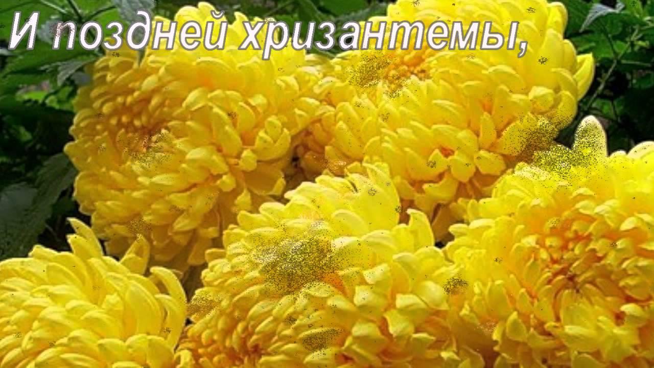картинки цветы жёлтые
