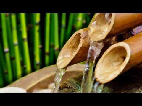 60 Minutes Beautiful Bamboo Flute Zen Relax Music: Nature Tropical Forest Sounds Meditation Sleep