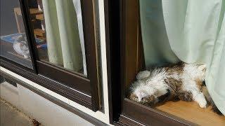 朝日を浴びて気持ちよさそうなボス猫兄さんです。 今週は久しぶりにお昼...